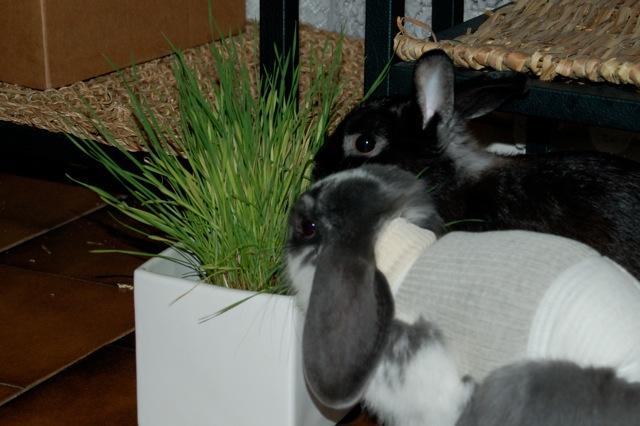 Rabbit story : histoire d'un coup de foudre DSC_2953