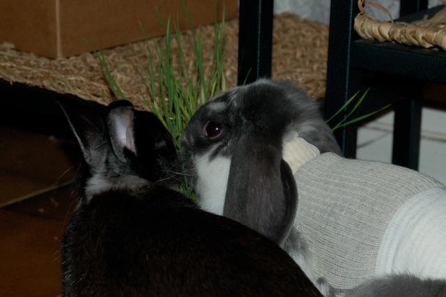 Rabbit story : histoire d'un coup de foudre DSC_2955
