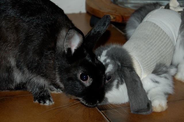 Rabbit story : histoire d'un coup de foudre DSC_2958