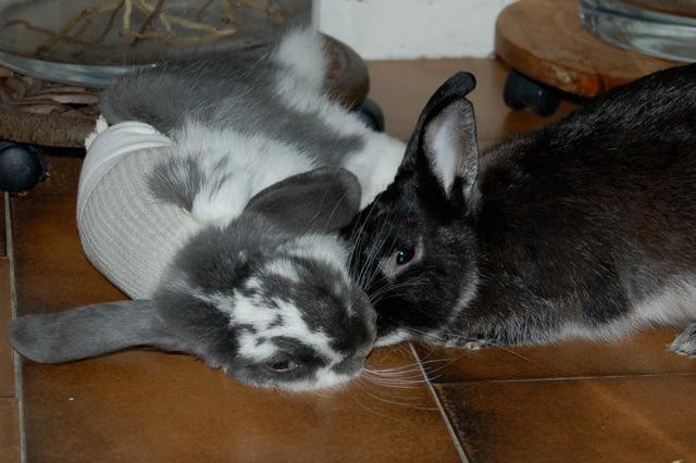 Rabbit story : histoire d'un coup de foudre DSC_2963